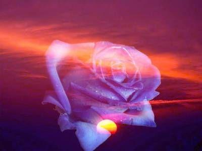 Rose sur coucher de soleil - Coucher de soleil rose ...